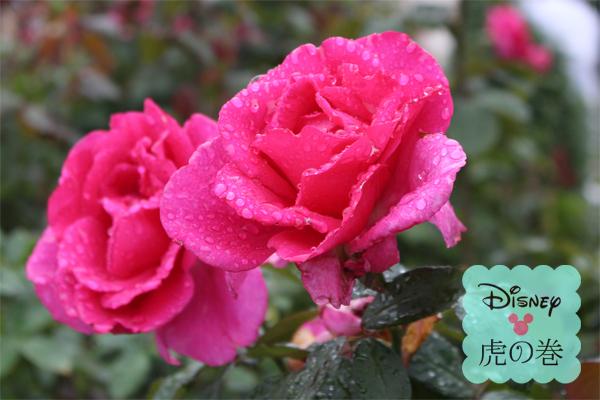 ディズニーランドのバラ