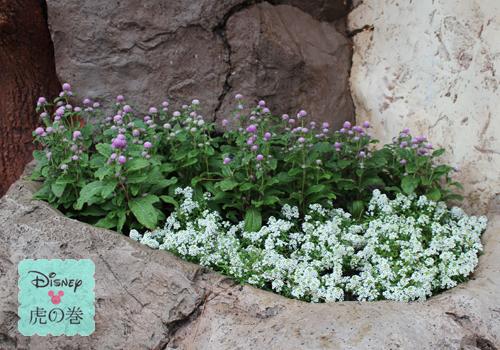 ディズーランド 花